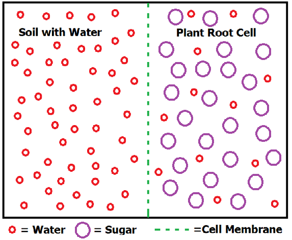 osmosis cell wall and sodium chloride solution essay The movement of solutes and water across cellular membranes is an overarching   calculate the solute potential of a 01 m nacl solution at 25°c if the.