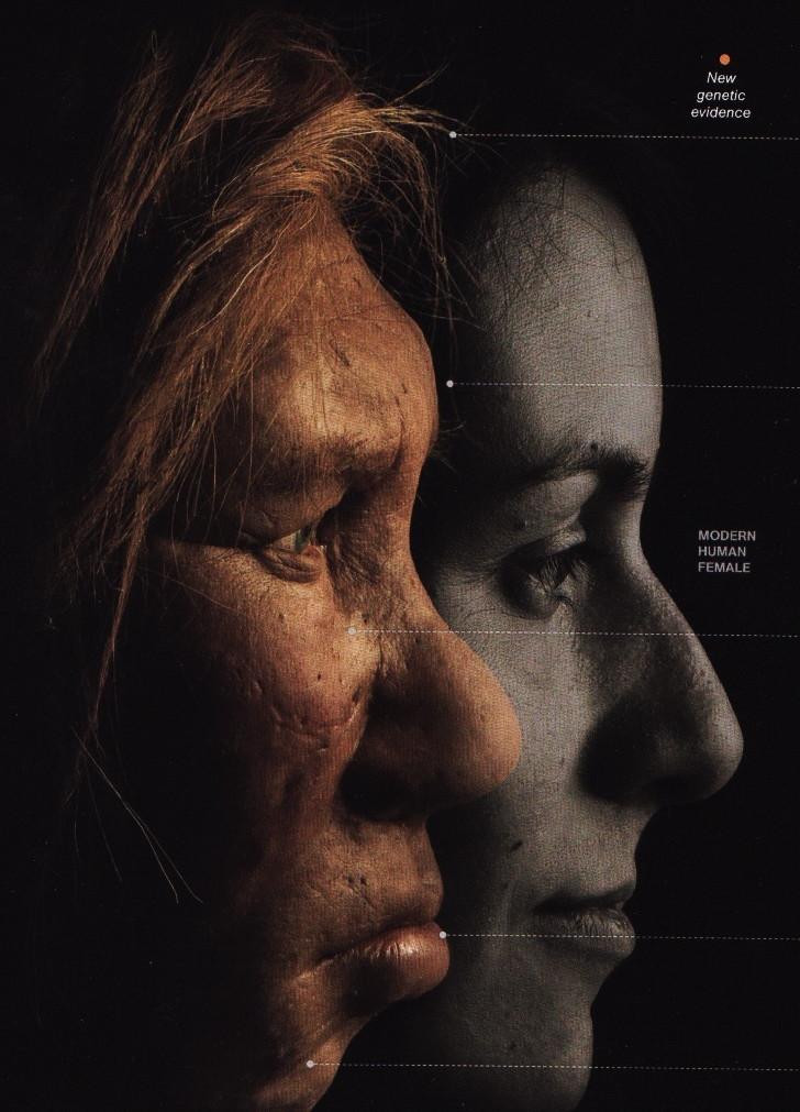 Metaphorical Web: My Inner Neanderthal